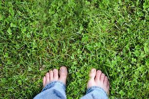 iarba zdrobita sub talpi